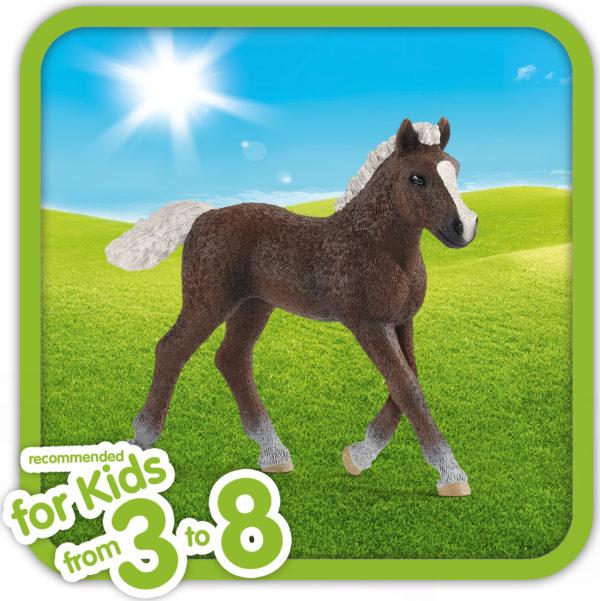 Black Forest Foal