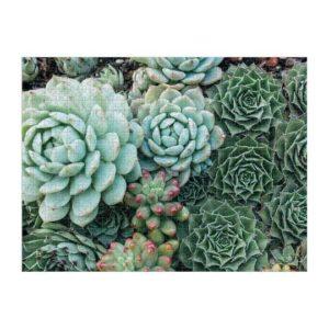 Succulents Side A